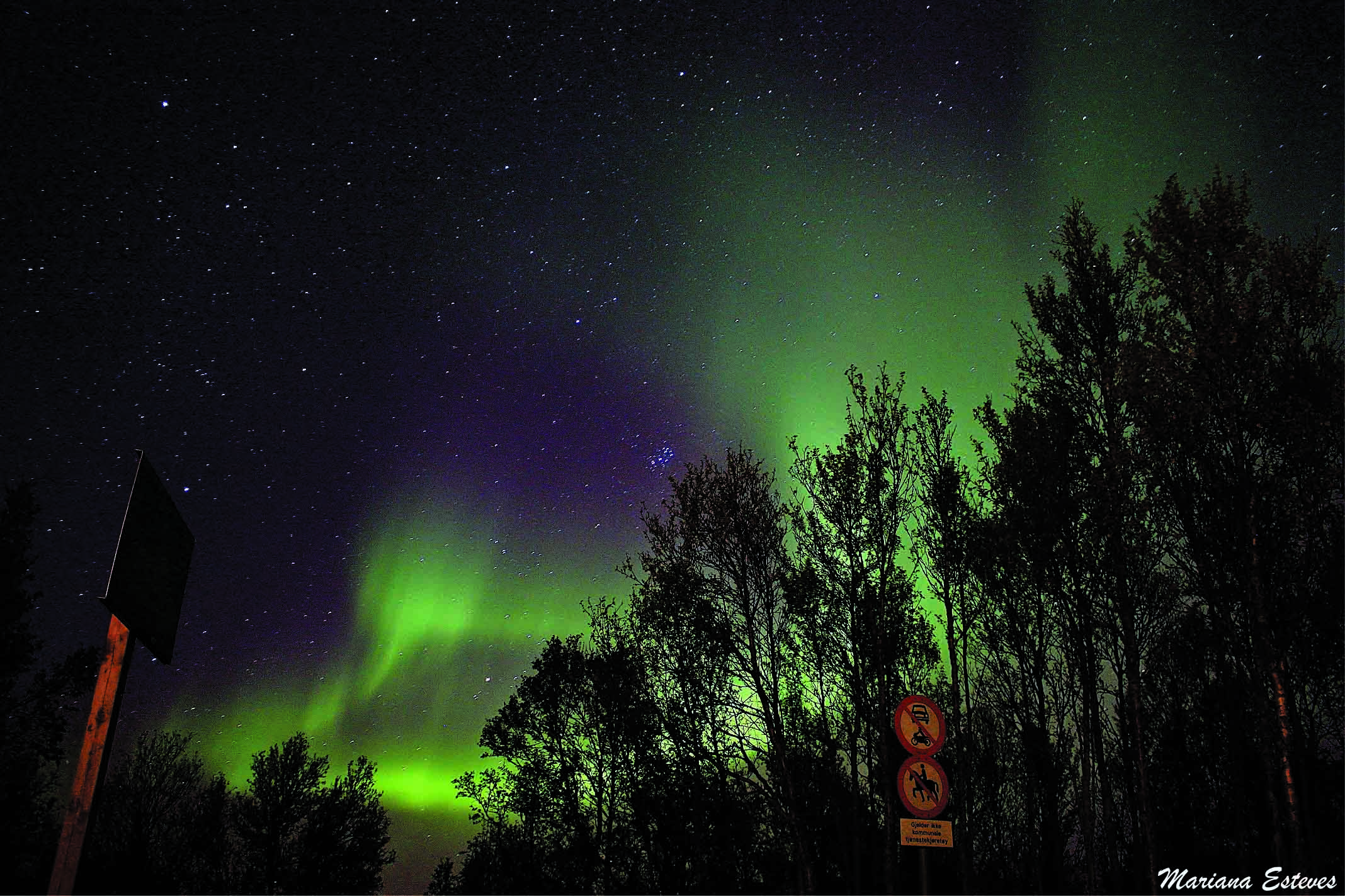 The Northern Lights in Northern Norway (Photo: Mariana Esteves).