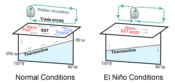 Schematic of the equatorial Pacific ocean-atmosphere system under normal conditions (left) and during El Niño conditions (right). The ocean and atmosphere interact through the Bjerknes feedback between sea surface temperatures and trade winds.